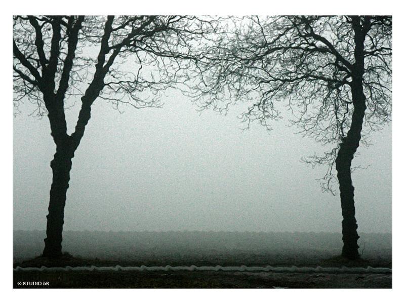 A1-Vrije expressie-Bomen in de mist-1-in kader-STUDIO 56