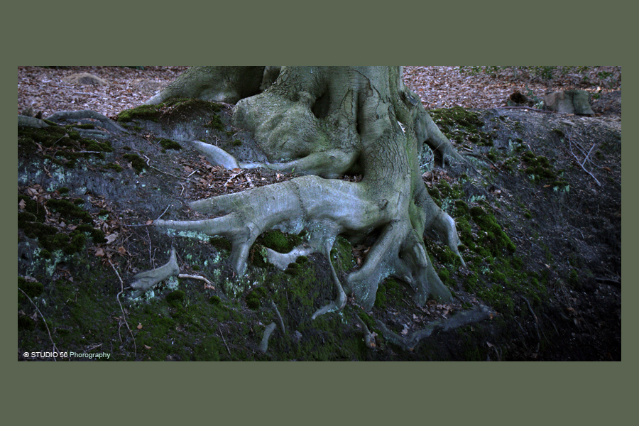 A1-Bomen-Giant boomwortels-vervolg-in kader-STUDIO 56