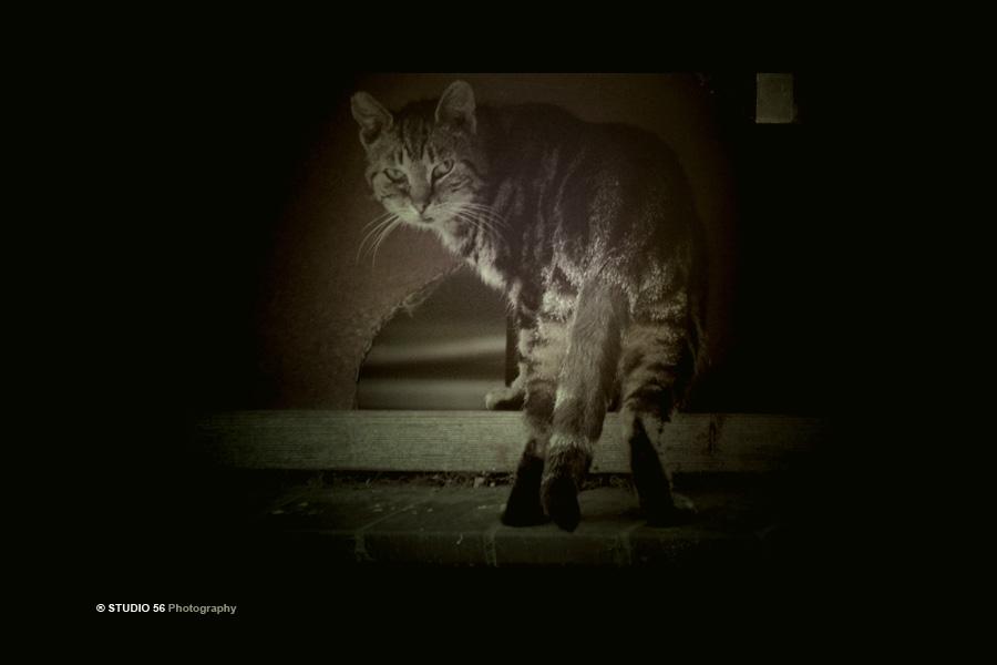 A1-Dieren-Katten-gat in schuur-zwart-STUDIO 56