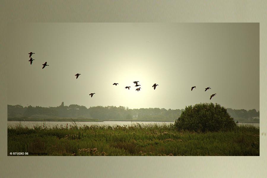 A1-Vrije expressie-Aan het Zuidlaardermeer-STUDIO 56