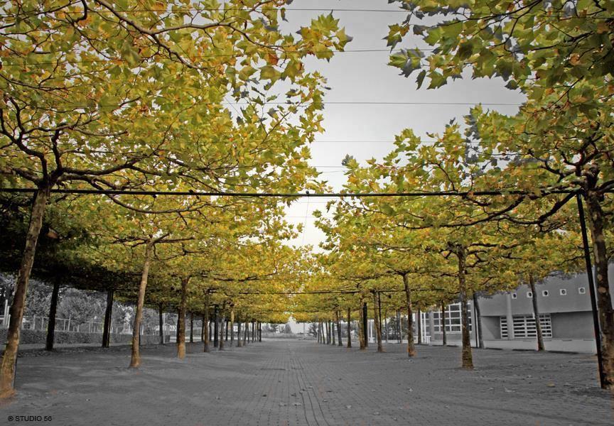 A1-Photography-Herfst-Platanen